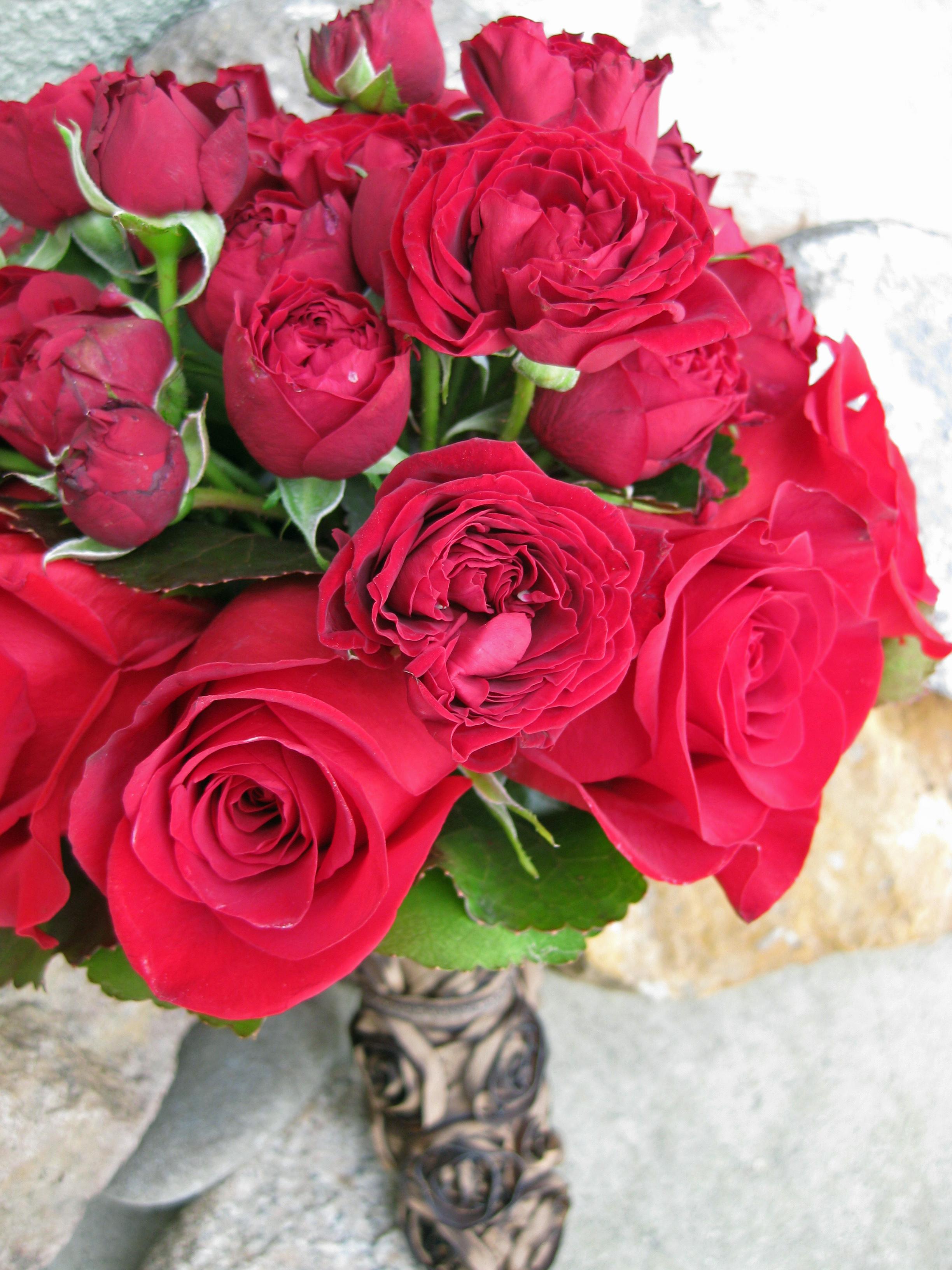 Roses In Garden: Floral Design By Jacqueline