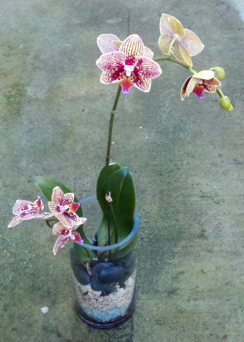 Orchids Plant- Floral Design By Jacqeuline Ahne